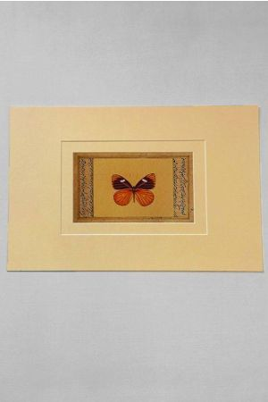 Adonis Antique Butterfly